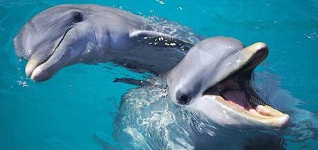 Healing Energy and Talking to Dolphins
